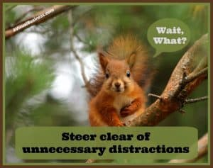 Squirrel syndrome can get the best of us, kill the distractions